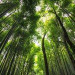 arashiyama_bamboo-ormanlari-kyoto-japonya